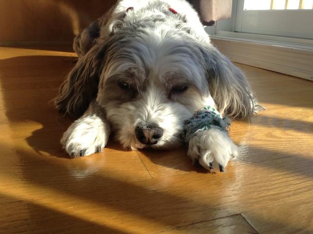 mon chien n 39 est pas comme les autres forum chiens yorkshire terrier page 2 wamiz. Black Bedroom Furniture Sets. Home Design Ideas