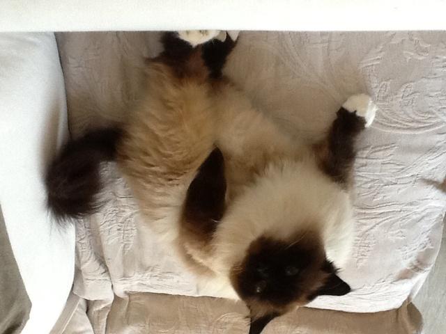 puis je faire d griffer les pattes arri res de mon chat question entretenir son chat wamiz. Black Bedroom Furniture Sets. Home Design Ideas