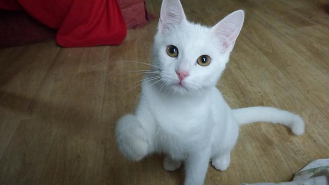 Metz 2 Chatons Male Blanc A Adopter Forum Chats A Donner Wamiz