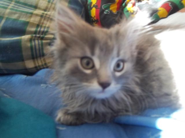 Des nouvelle d 39 hermine forum eduquer son chat for Adaptation chat nouvelle maison