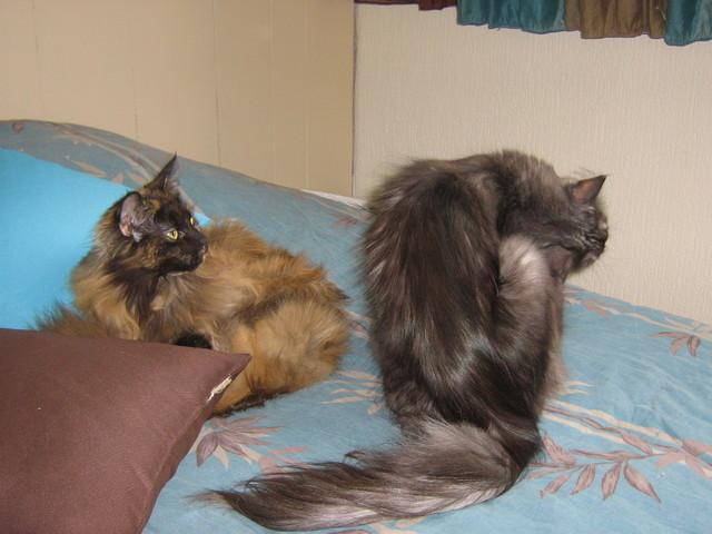 chats en direct datant ce que les scans de datation montrent