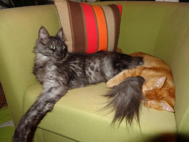 Chat sexe poissy