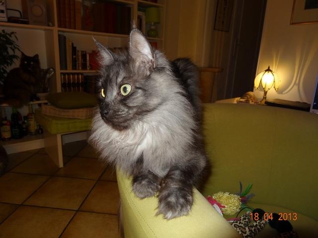 comment a nos chats n 39 aiment pas nos bisous forum chats page 6 wamiz. Black Bedroom Furniture Sets. Home Design Ideas