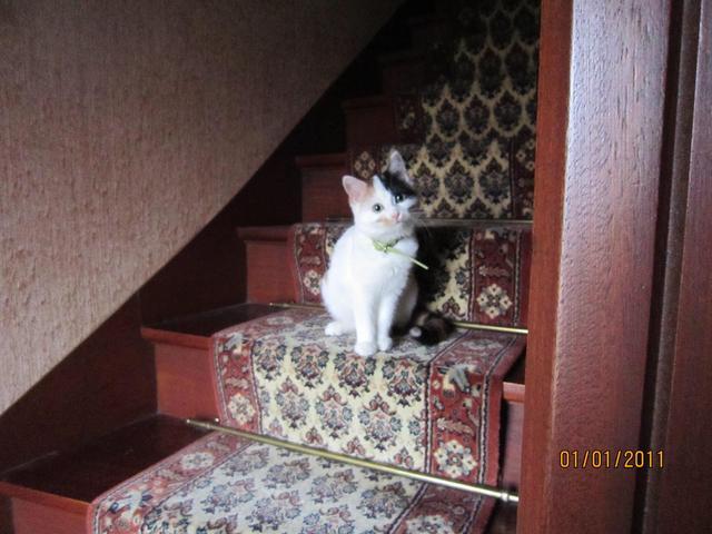 Comment emp cher mon chat de griffer mes meubles - Comment empecher un chat de gratter a la porte ...