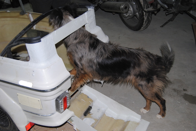 motard e s et chiens motards sur wamiz forum voyager et jouer avec son chien page 4 wamiz. Black Bedroom Furniture Sets. Home Design Ideas
