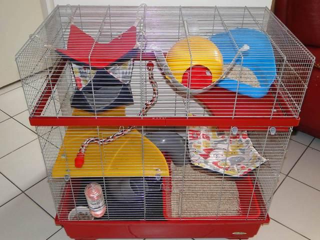 le nouvel am nagement de ma cage rats forum rat rat page 2 wamiz. Black Bedroom Furniture Sets. Home Design Ideas