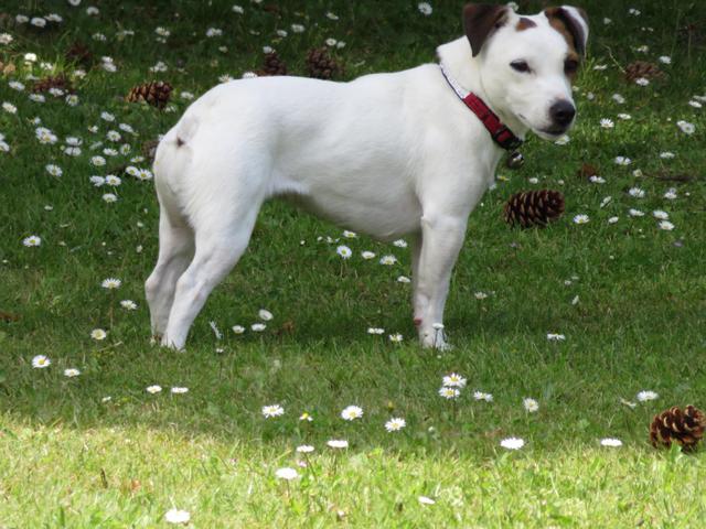 Comment am liorer le comportement de ma chienne - Comment porter plainte pour abus de confiance ...