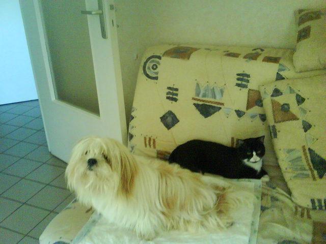 Combien de temps pour que mon chien s 39 habitue un chariot de marche question soigner son - Combien de temps un chat peut disparaitre ...