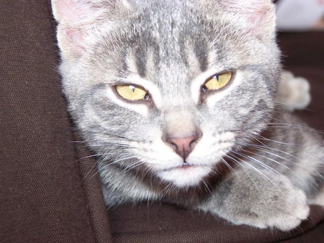 mon chaton a encore des puces malgr le traitement forum soigner son chat wamiz. Black Bedroom Furniture Sets. Home Design Ideas