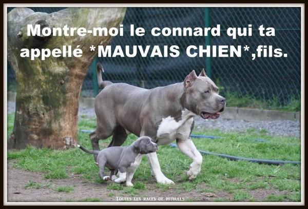 Travesti Bien Chaude Du Rhone