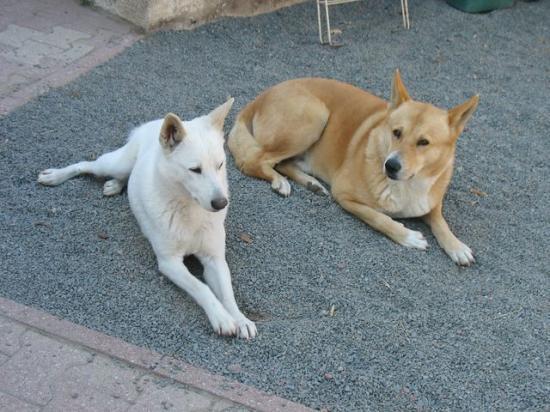 Choisir la race d'un chien - Forum Choisir son chien
