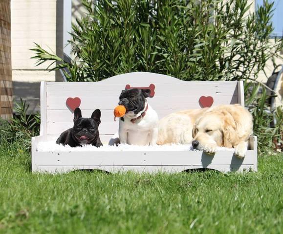 quelle taille de panier faut il pour un chien de grand gabarit forum chiens golden. Black Bedroom Furniture Sets. Home Design Ideas