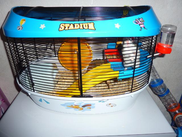 quelle cage pour un hamster russe question hamster wamiz. Black Bedroom Furniture Sets. Home Design Ideas