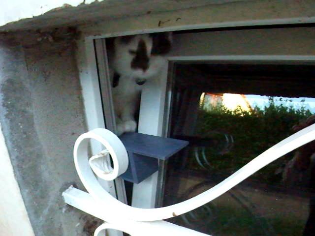 La passerelle pour chat forum entretenir son chat wamiz for Fenetre oscillo battant chat