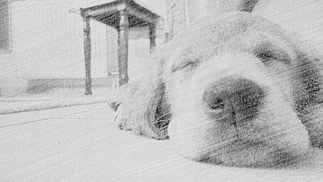 comment emp 234 cher mon chien de monter sur le canap 233 question eduquer chien wamiz