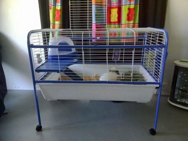 limited guantity sleek outlet for sale Cage pour hamster doré (syriens) - Forum Hamster - Hamster ...