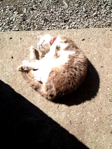 chat se roule dans la terre
