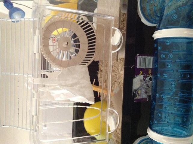 am nagement cage forum souris souris wamiz. Black Bedroom Furniture Sets. Home Design Ideas