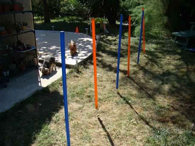 Comment faire soi m me un parcours d 39 agility pour chien for Agility au jardin