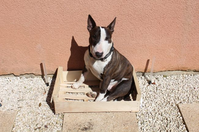 Allergie poil Ras ?? 2 - Forum Chiens - Bull Terrier - Wamiz
