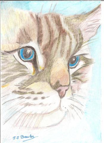 Les dessins d 39 animaux forum chiens wamiz - Dessiner un yorkshire ...