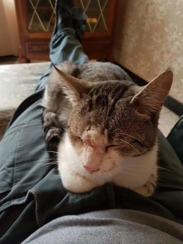 miel de manuka pour chat