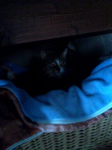 comment pi ger un chat libre qui s 39 intalle chez moi forum chats goutti re wamiz. Black Bedroom Furniture Sets. Home Design Ideas