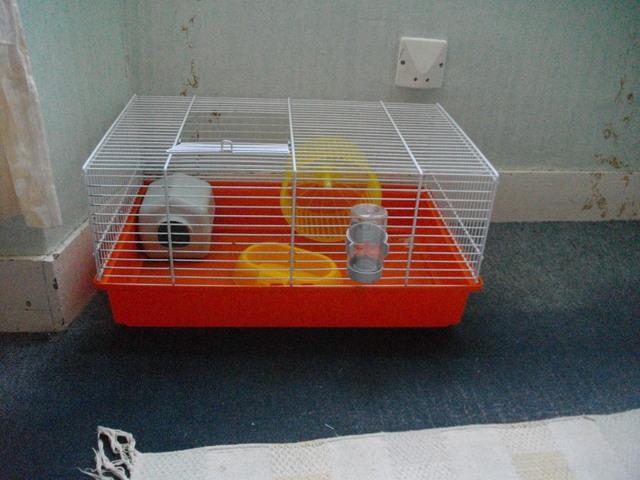 quel taille fait un hamster dor adulte question hamster wamiz. Black Bedroom Furniture Sets. Home Design Ideas