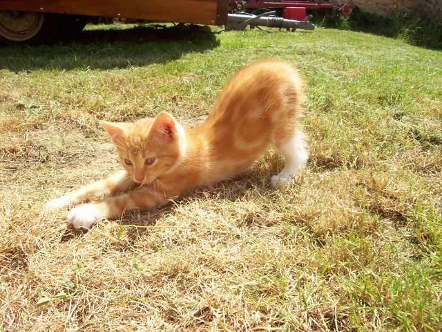 Chaton A Donner 78 Nos Amis Les Animaux