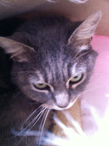 Combien de temps met un chat pour s 39 habituer son nouveau logement question comprendre son - Combien de temps un chat peut disparaitre ...