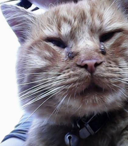 Les yeux et les oreilles du chat