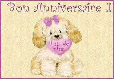 anniversaire chien bichon