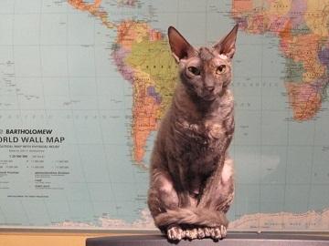 Comment faire cohabiter deux chats ? - Forum Eduquer son