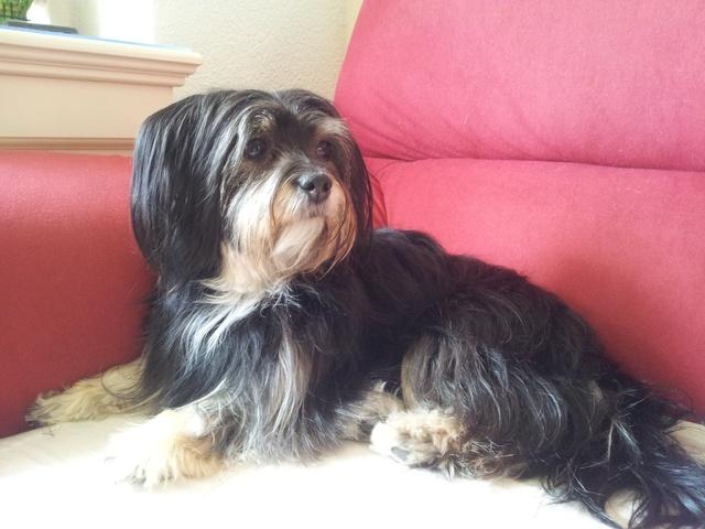 combien de temps pour la repousse des poils d 39 un chien. Black Bedroom Furniture Sets. Home Design Ideas