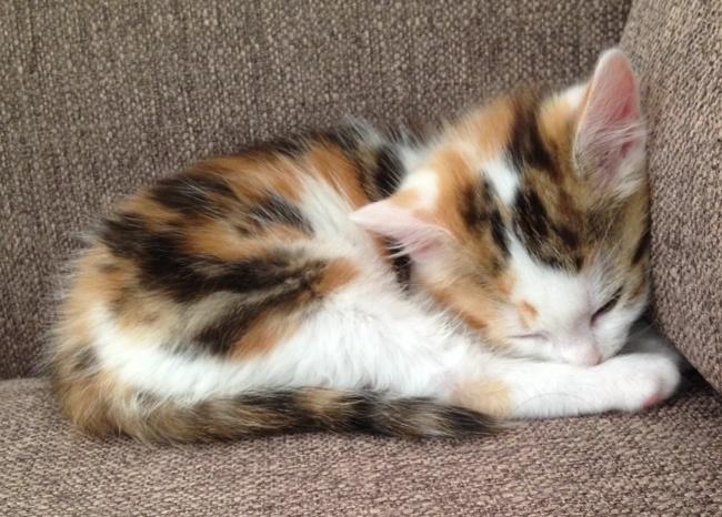 Comment emp cher mon chat de gratter aux portes - Comment empecher un chat de gratter a la porte ...