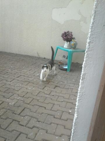 Comment savoir si une chatte abandonn e attend des chatons forum reproduct - Comment savoir a qui appartient une maison abandonnee ...