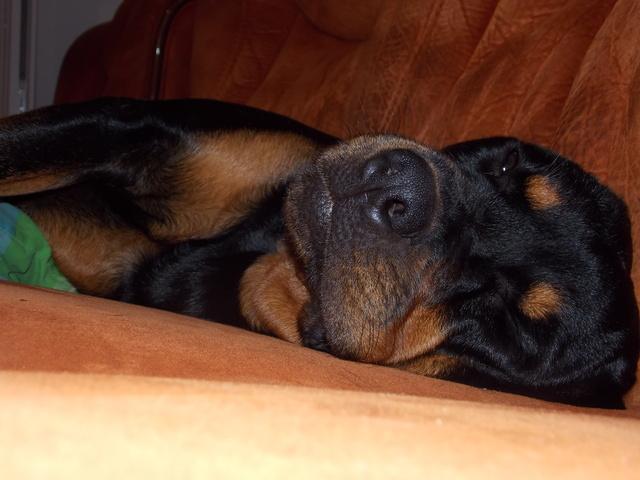 Dormir avec son chien 2 - Forum Chiens - Page 5 - Wamiz