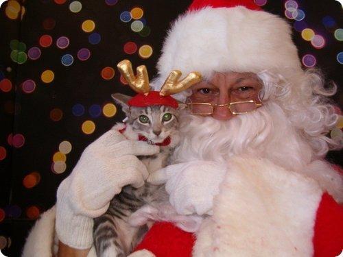 Top 14 des superbes photos de p re no l avec des chats forum chats wamiz - Image de chat de noel ...