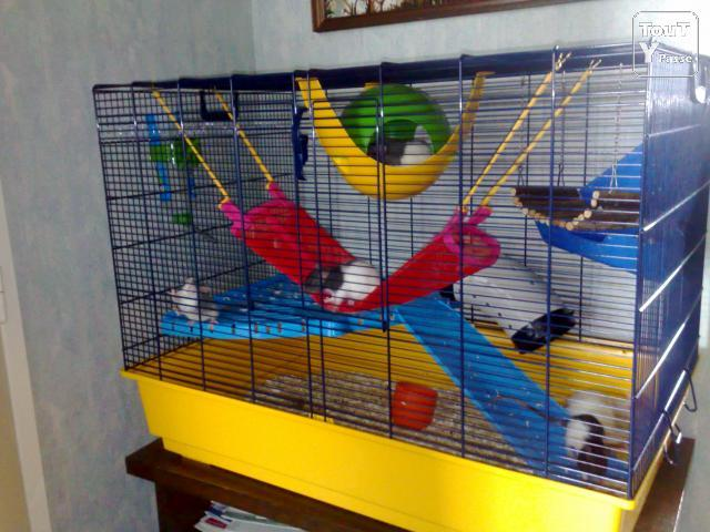 Quel type de cage acheter pour des rats question - Combien de portee par an pour un chat ...