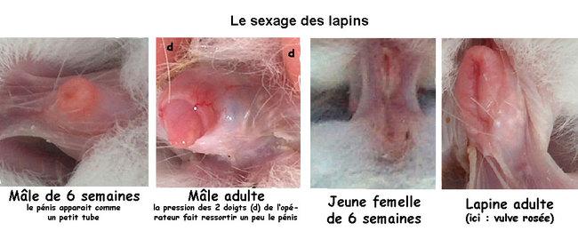 Comment savoir le sexe d'un bébé