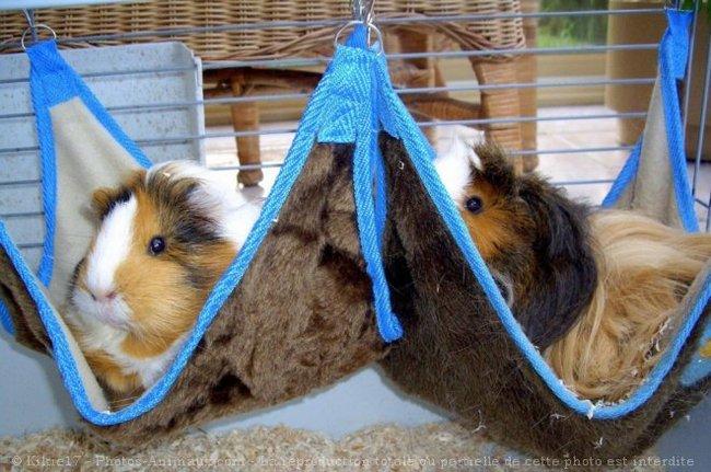 Comment fabriquer un lit pour mon cochon d 39 inde - Fabriquer un lit pour chien ...
