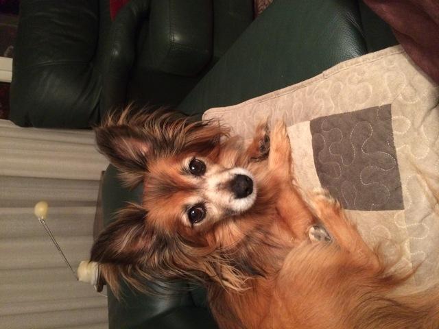 comment g rer l 39 agressivit de mon chien adopt question eduquer son chien wamiz. Black Bedroom Furniture Sets. Home Design Ideas