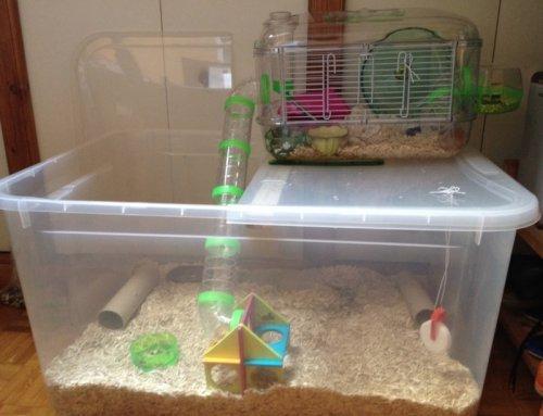 bin cage pour plus d 39 espace forum hamster hamster wamiz. Black Bedroom Furniture Sets. Home Design Ideas