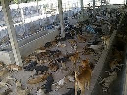Voila D Ou Viennent Souvent Les Chiens Achetez En Animalerie