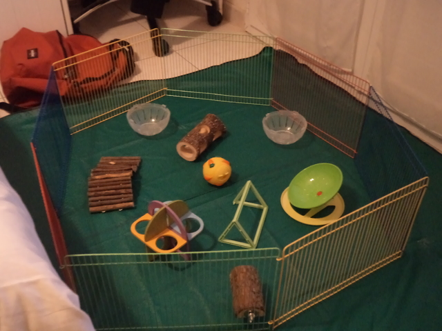 Jouet pour mon hamster forum hamster hamster wamiz - Jeux pour lapin a fabriquer ...