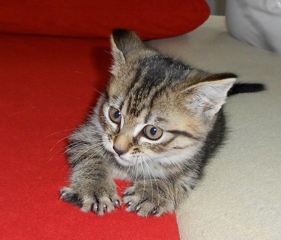 Quelle quantit de p t e pour ch ton forum nourrir son - Combien de portee par an pour un chat ...
