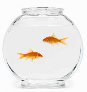 La v rit sur les poissons rouges forum aquariophilie for Bocal poisson acheter