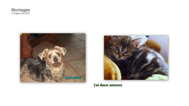 A partir de quel age peut on couper les ongles d 39 un chaton question eduquer son chien wamiz - Couper les ongle d un chien ...