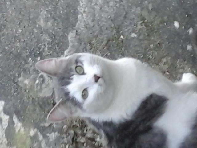 Chat errant pot de colle que faire question eduquer - Mon chat me colle plus que d habitude ...