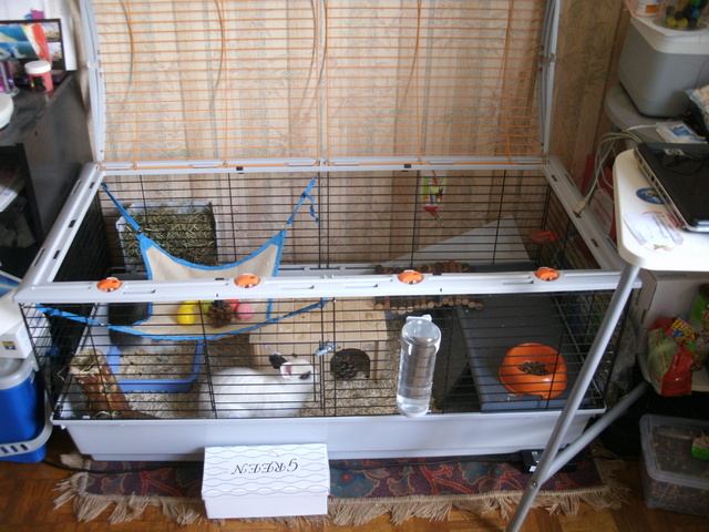 assembler 2 cages forum lapin lapin wamiz. Black Bedroom Furniture Sets. Home Design Ideas